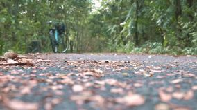 Ένα οδηγώντας ποδήλατο ατόμων στη δασική διαδρομή στο κτύπημα Krachao, Ταϊλάνδη απόθεμα βίντεο