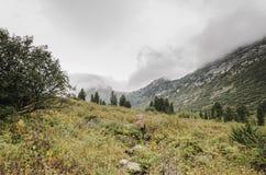 Ένα ομιχλώδες τοπίο, μια άποψη των απότομων βράχων, το δάσος, βουνά Ergaki στοκ φωτογραφία με δικαίωμα ελεύθερης χρήσης
