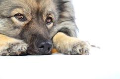 Ένα λουρί σκυλιών Στοκ φωτογραφίες με δικαίωμα ελεύθερης χρήσης