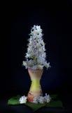 Ένα λουλούδι κάστανων σε ένα κηροπήγιο, όπως ένα κερί, σε ένα μαύρο υπόβαθρο Στοκ εικόνα με δικαίωμα ελεύθερης χρήσης