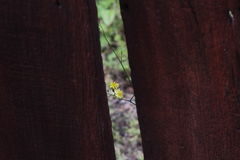 Ένα λουλούδι που αυξάνεται πίσω τον τοίχο Στοκ Φωτογραφία