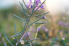 Ένα λουλούδι σε έναν τομέα Στοκ Εικόνες