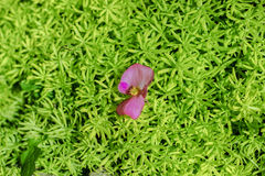 Ένα λουλούδι στη χλόη Στοκ Φωτογραφία