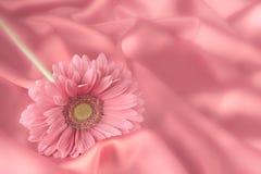 Ένα λουλούδι gerbera σε ένα υπόβαθρο από το ύφασμα Στοκ φωτογραφία με δικαίωμα ελεύθερης χρήσης