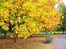 Ένα πάρκο το φθινόπωρο Στοκ Φωτογραφίες
