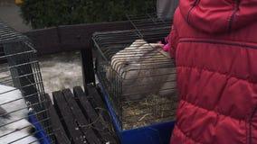 Ένα παιδί κτυπά μια μεγάλη άσπρη συνεδρίαση κουνελιών σε ένα κλουβί μετάλλων Κατοικίδια ζώα παιδιών ένα μεγάλο κρεμώδες λαγουδάκι απόθεμα βίντεο