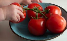 Ένα παιδί παίρνει μια ντομάτα από έναν κλάδο σε ένα τυρκουάζ πιάτο στοκ φωτογραφίες