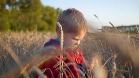 Ένα παιδί στέκεται σε έναν τομέα του σίτου Το αγόρι κρατά ένα αυτί του σίτου φιλμ μικρού μήκους