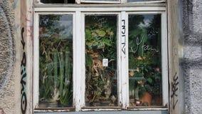 ένα παράθυρο στη ζούγκλα, Βερολίνο, Γερμανία στοκ εικόνες με δικαίωμα ελεύθερης χρήσης
