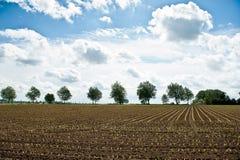 Ένα πεδίο καλαμποκιού με τα δέντρα στην ανασκόπηση Στοκ Εικόνες