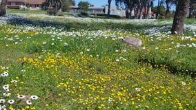 Ένα πεδίο των λουλουδιών Στοκ εικόνα με δικαίωμα ελεύθερης χρήσης