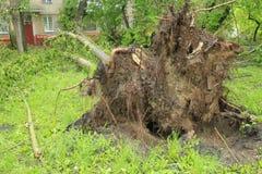 Ένα πεσμένο δέντρο Στοκ Εικόνα