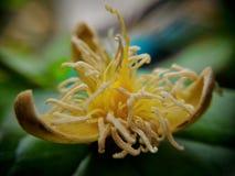 Ένα πεσμένο λουλούδι Στοκ Εικόνες