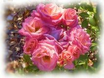 Ένα πετρέλαιο χρωμάτισε την ανθοδέσμη των ρόδινων τριαντάφυλλων στοκ φωτογραφία με δικαίωμα ελεύθερης χρήσης