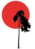 Πεύκο-δέντρο και ηλιοβασίλεμα Στοκ εικόνα με δικαίωμα ελεύθερης χρήσης