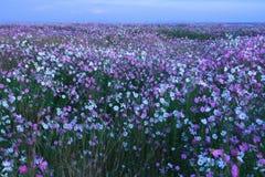 Ένα πεδίο των λουλουδιών Στοκ εικόνες με δικαίωμα ελεύθερης χρήσης