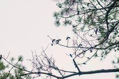 Ένα πλαίσιο των κλάδων, των βελόνων και των κώνων δέντρων πεύκων στοκ εικόνες με δικαίωμα ελεύθερης χρήσης