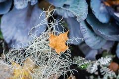 Ένα πορτοκαλί φύλλο φθινοπώρου που πέφτει στη διακοσμητική χλόη, τα χρώματα και το φως του φθινοπώρου Σύγχρονο υπόβαθρο, ταπετσαρ Στοκ φωτογραφίες με δικαίωμα ελεύθερης χρήσης