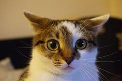 Ένα πορτρέτο γατών Στοκ εικόνες με δικαίωμα ελεύθερης χρήσης