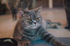 Ένα πορτρέτο μιας γάτας στο δωμάτιο με τη μαλακή ελαφριά και μαλακή εστίαση Η κύρια εστίαση είναι στα μάτια ενώ η άσπρη ισορροπία Στοκ Φωτογραφίες