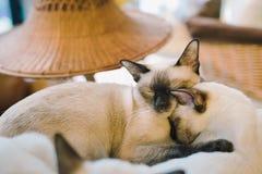 Ένα πορτρέτο μιας γάτας στο δωμάτιο με τη μαλακή ελαφριά και μαλακή εστίαση Η κύρια εστίαση είναι στα μάτια ενώ η άσπρη ισορροπία Στοκ εικόνες με δικαίωμα ελεύθερης χρήσης