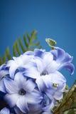 Ένα πορφυρό και άσπρο λουλούδι υάκινθων Στοκ φωτογραφία με δικαίωμα ελεύθερης χρήσης