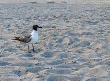 Ένα πουλί διαβίωσης που στέκεται στην άμμο Στοκ φωτογραφίες με δικαίωμα ελεύθερης χρήσης