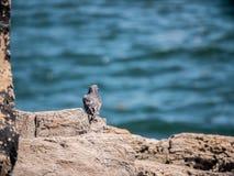 Ένα πουλί που παίρνει κάποιο ήλιο στοκ εικόνα
