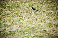 Ένα πουλί στα πεσμένα φύλλα το φθινόπωρο Στοκ Φωτογραφία