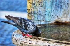 Ένα πουλί στοκ εικόνα
