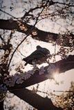 ΈΝΑ ΠΟΥΛΙ ΕΙΝΑΙ ΕΤΟΙΜΟ ΝΑ ΠΕΤΑΞΕΙ Στοκ φωτογραφίες με δικαίωμα ελεύθερης χρήσης