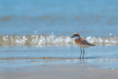 Ένα πουλί νερού Στοκ φωτογραφίες με δικαίωμα ελεύθερης χρήσης