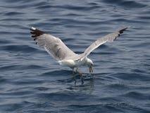 Ένα πουλί πέρα από τη θάλασσα Στοκ φωτογραφία με δικαίωμα ελεύθερης χρήσης