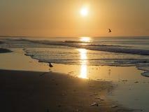Ένα πουλί πετά στα ύψη πέρα από τον ωκεανό στην ανατολή στοκ εικόνα