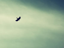 Ένα πουλί που διαδίδουν τα φτερά του και μύγα στον ουρανό ουρανού αναδρομική φιλτραρισμένη εικόνα Στοκ Εικόνες