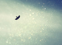 Ένα πουλί που διαδίδουν τα φτερά του και μύγα στον ουρανό ουρανού η αναδρομική φιλτραρισμένη εικόνα με ακτινοβολεί Στοκ φωτογραφία με δικαίωμα ελεύθερης χρήσης