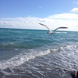 Ένα πουλί που πετά πέρα από τη θάλασσα Στοκ εικόνες με δικαίωμα ελεύθερης χρήσης