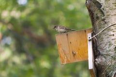 Ένα πουλί σε ένα birdhouse Στοκ Φωτογραφία