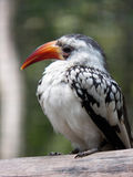 Ένα πουλί στον κλάδο Στοκ Φωτογραφία