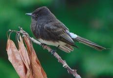 Ένα πουλί στον κλάδο Στοκ φωτογραφία με δικαίωμα ελεύθερης χρήσης