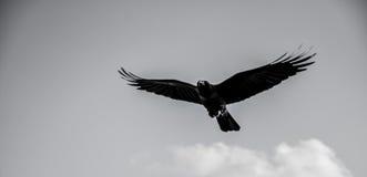 Ένα πουλί στον ουρανό Στοκ Εικόνες