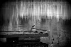 Ένα πουλί Στοκ Εικόνες