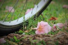 Ένα ποδήλατο και λουλούδια στο έδαφος σε ένα δημόσιο πάρκο Στοκ φωτογραφίες με δικαίωμα ελεύθερης χρήσης