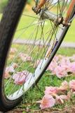 Ένα ποδήλατο και λουλούδια στο έδαφος σε ένα δημόσιο πάρκο Στοκ φωτογραφία με δικαίωμα ελεύθερης χρήσης