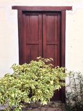ένα πράσινο δέντρο μπροστά από μια ξύλινη πόρτα Στοκ εικόνες με δικαίωμα ελεύθερης χρήσης