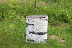Ένα πράσινο καλοκαίρι λιβαδιών χλόης κούτσουρων σημύδων Στοκ Φωτογραφίες