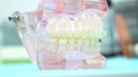 Ένα πρότυπο του σαγονιού στον πίνακα της οδοντικής κλινικής, της οδοντ στοκ φωτογραφία με δικαίωμα ελεύθερης χρήσης