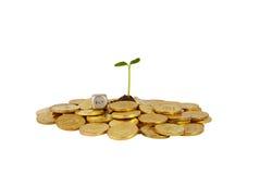Ένα πλάνο στούντιο μιας δέσμης των νομισμάτων με ένα μικρό comin μίσχων φυτών Στοκ Εικόνες