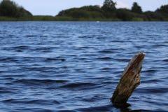 Ένα ραβδί που βγαίνει από τη λίμνη στοκ φωτογραφία με δικαίωμα ελεύθερης χρήσης