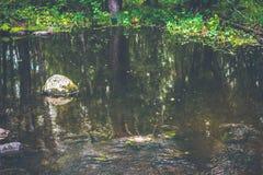 Ένα ρεύμα βουνών με ένα γρήγορο ρεύμα σε ένα πράσινο θερινό δάσος Στοκ φωτογραφία με δικαίωμα ελεύθερης χρήσης